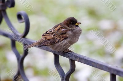 Sparrow in expectation