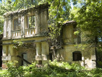 Old, overgrown building