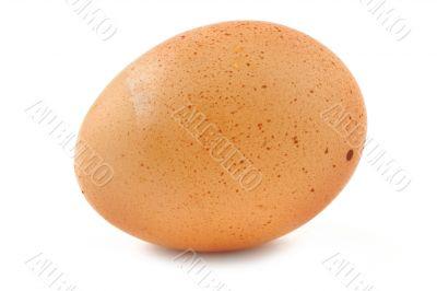 free-range egg