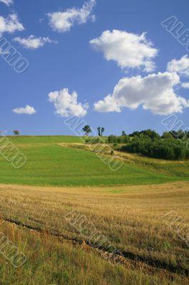 idyllic summer scenery