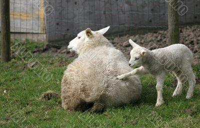 Get up mom!