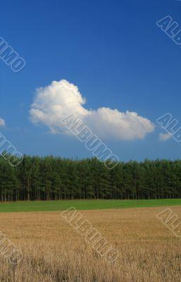 ryle field