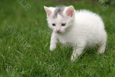 Tiny cat a little bit scared