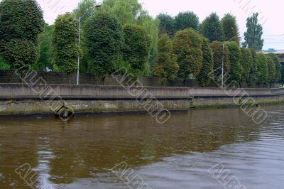 Rain. Embankment of Pregolya river 3