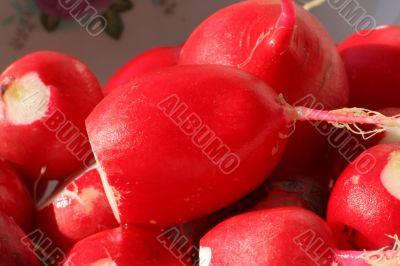 macro of peeled moist radishes
