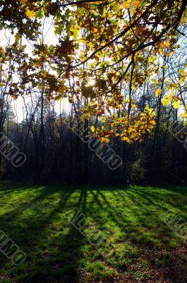 tree back-light