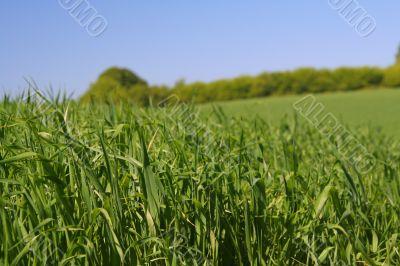 among rich green grass