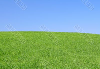 perfect meadow with clear sky