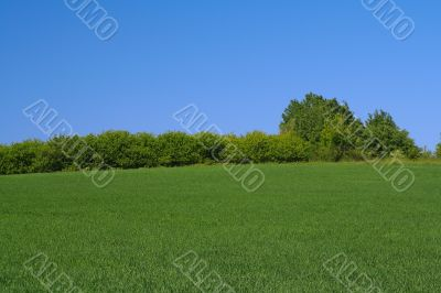 tree line on the edge of a perfect meadow