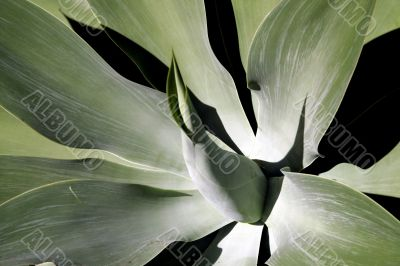 Soft Leaf Tropical Plant