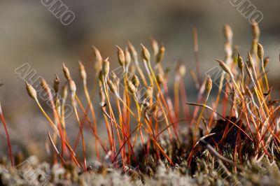 North moss