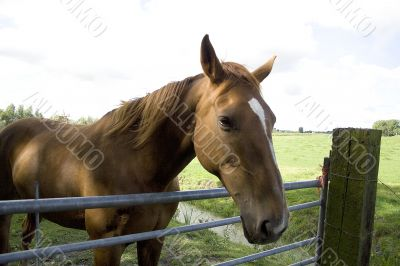 Brown horse standing in front of a fence