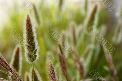 Wild vegetation