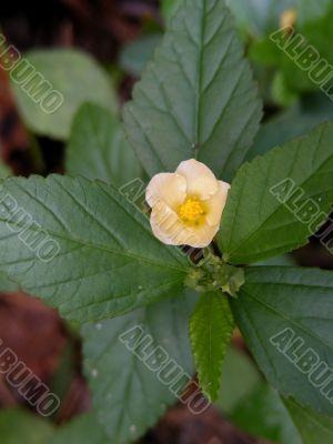 woodland wildflower