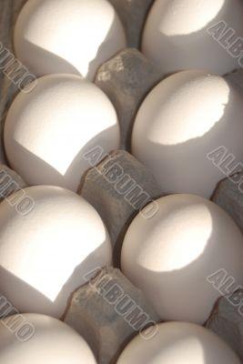 Eggs in the Carton