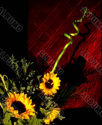 vivid sunflowers against maroon background