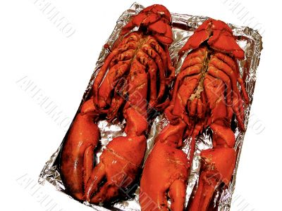 Two 3 Pound Lobsters