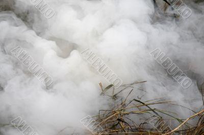 Grass burns