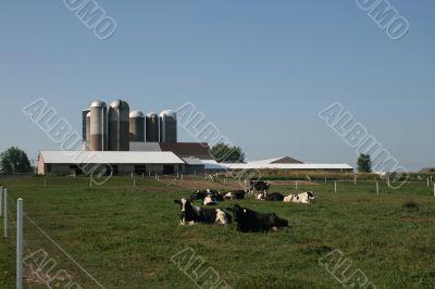 modern dairy farming