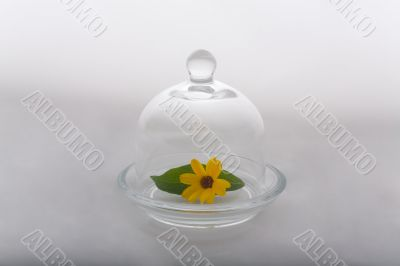 Flower and leaf protected by glass dome #1