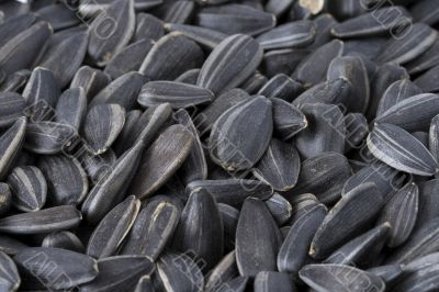 Large sunflower seeds