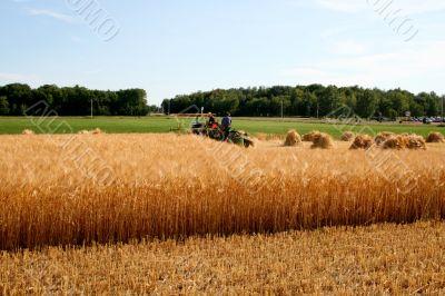 old ways harvesting