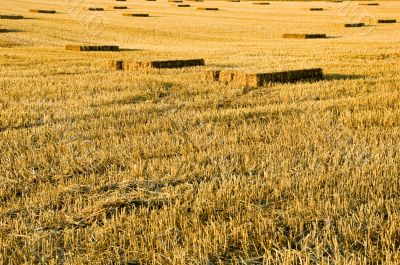 Straw Stubble Crop Harvest