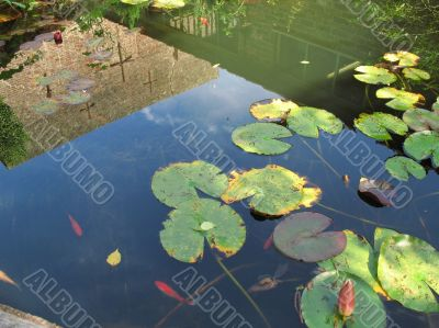 fish pond and reflection