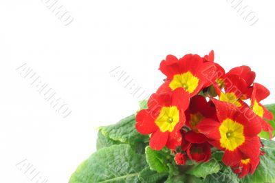 beautiful vivid flowers with copyspace