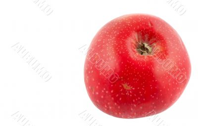 tasty  red apple - pure white background