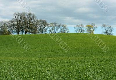 Green grass field with trees under clouds in spring