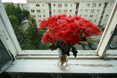 Chrysanthemum bouquet in glass vase on wIndow with house in background