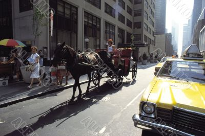 Horse Carriage on Street