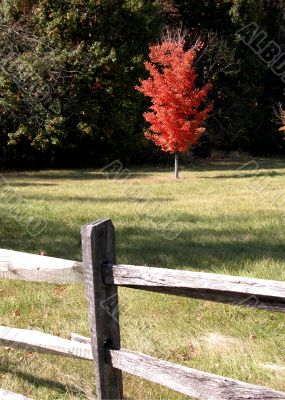 Fence with autumn tree
