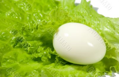 The boiled egg and salad