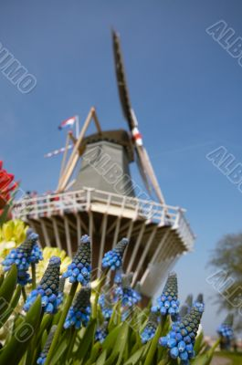 Dutch windmill and colorful flowers