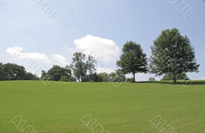 Trees on Grassy Hill