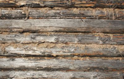 texture of wooden wall made of logs