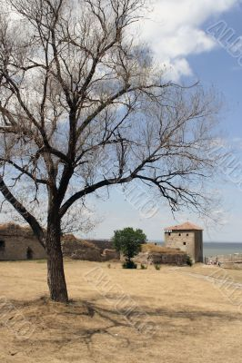 Tree in a fortress