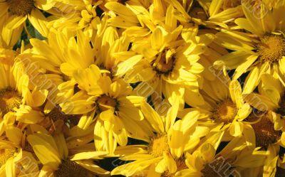 dewy sunny flowers