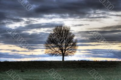 sunset landscape with tree silhouette