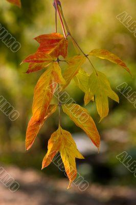 Warm palette of autumn