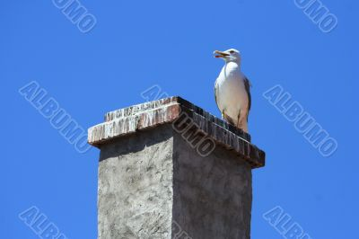 SEAGULL SEATING ON THE ROOF