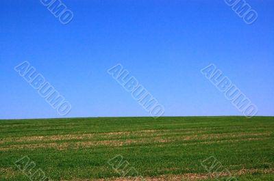 blue sky on grass