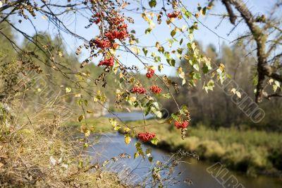 National reserve  Deer Streams The river Serga 12