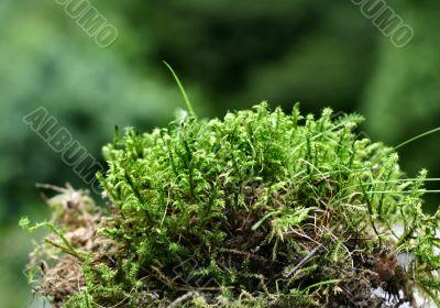 moss details
