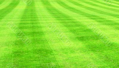 Lush green sports lawn