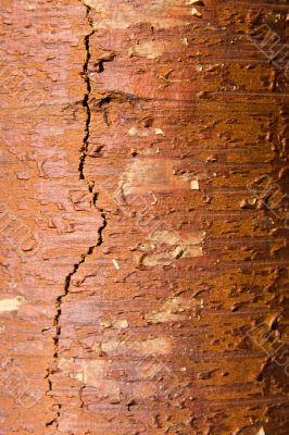 Texture from a birch bark