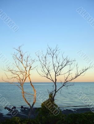 Bare Trees at Beach