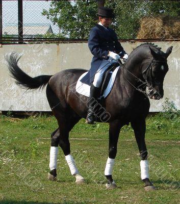 equestrian saddlewoman on black stallion